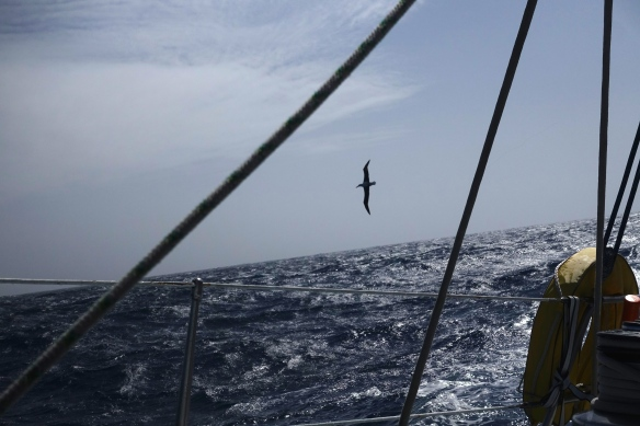 Passage du Drake - Albatros