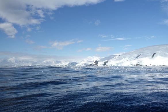 Venus - Arrivée en Antarctique 4