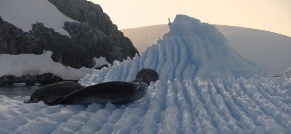 Venus - Antarctique - Archipel melchior